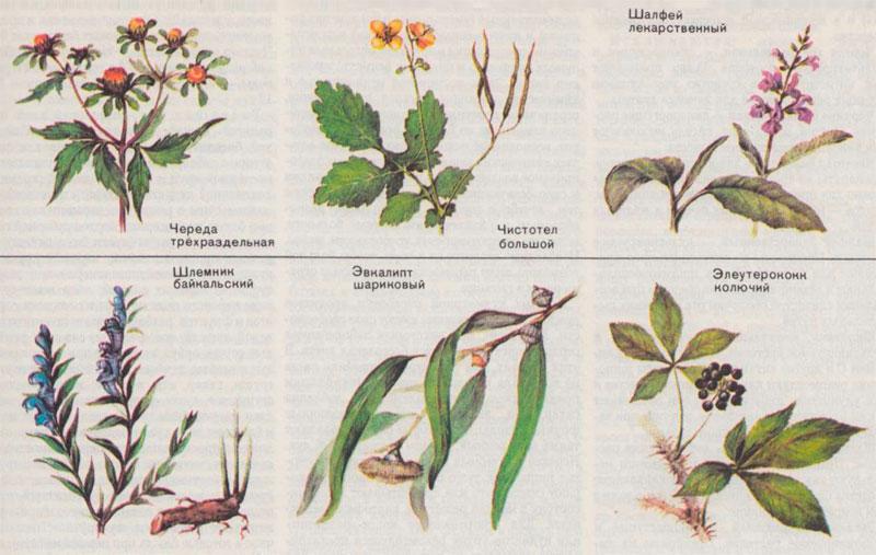это всё лесные цветы картинки с названиями и его описанием героям