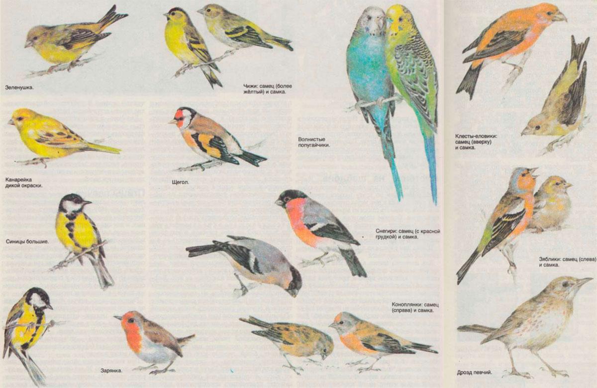 бывает как узнать породу птицы по фотографии порадует