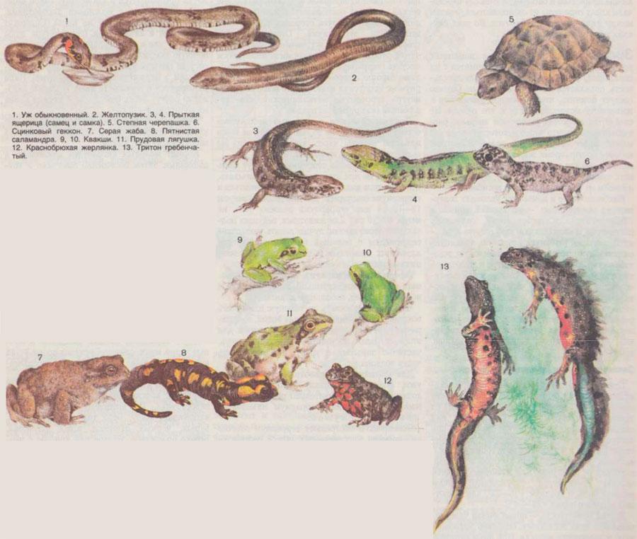 Чем можно кормить ящерицу в домашних условиях